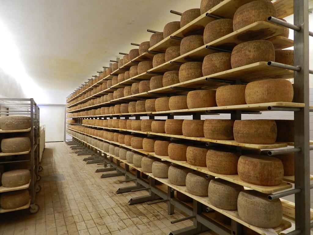 Blogtour – Seconda Parte: Come nasce il Pecorino Toscano DOP?