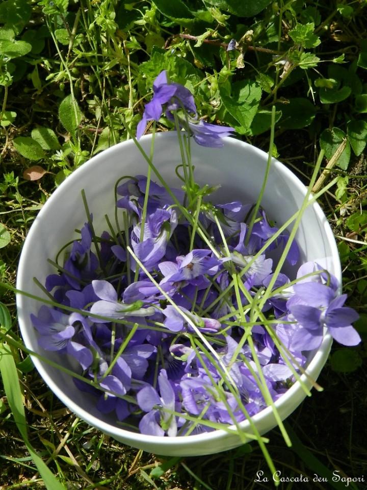 gelato alla violetta  yogurt  la cascata dei sapori, Disegni interni
