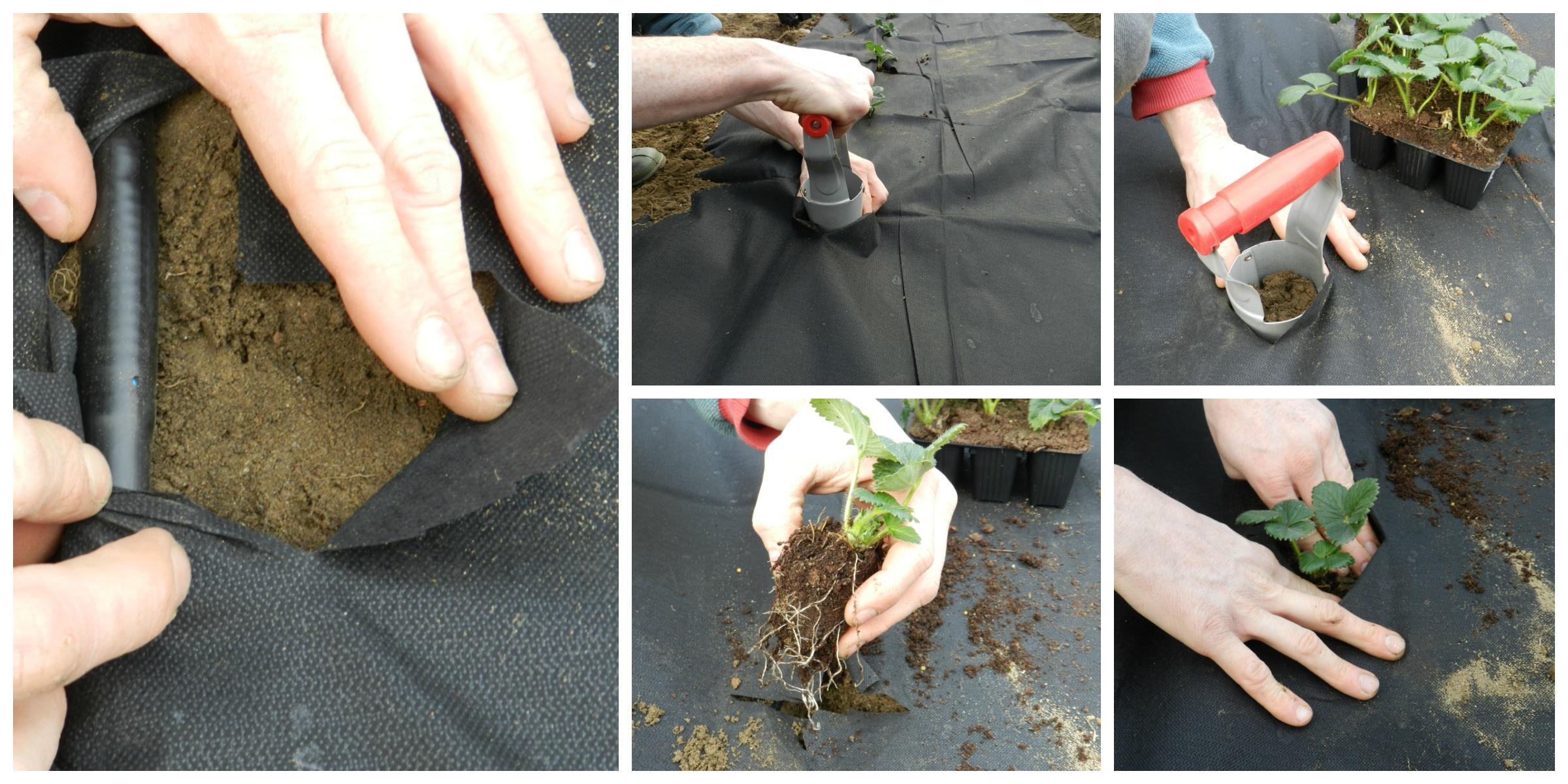L'ORTO AL NATURALE 2: Come coltivare le fragole