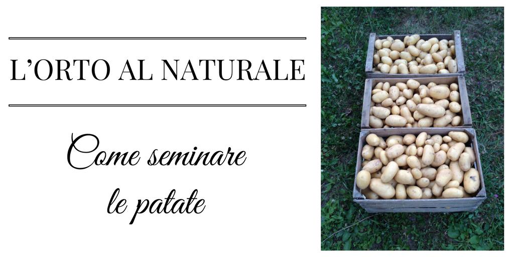 Come seminare le patate l orto al naturale la cascata for Quando raccogliere le patate