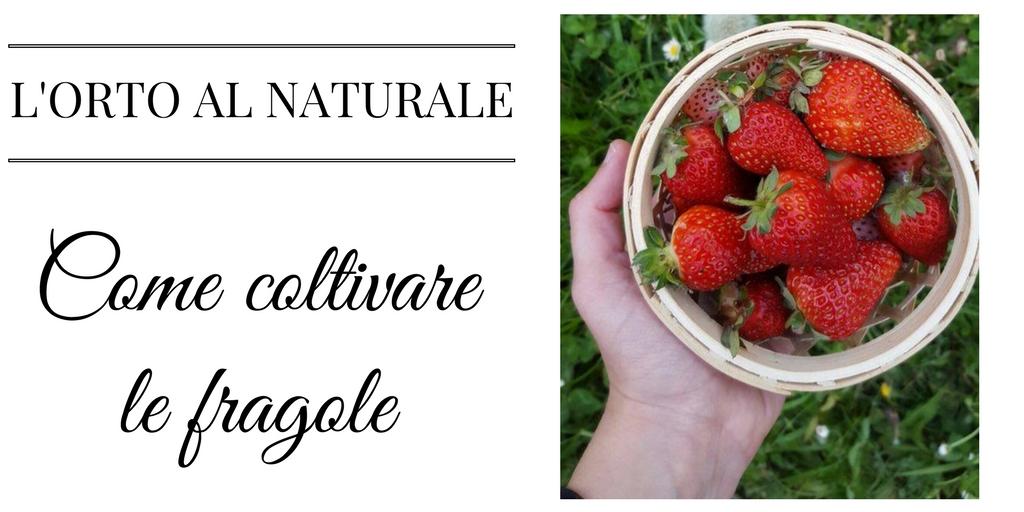 L'ORTO AL NATURALE 5: Come coltivare le fragole