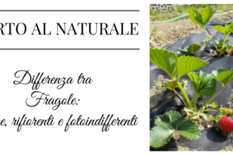 Differenza tra FRAGOLE unifere, rifiorenti e fotoindifferenti