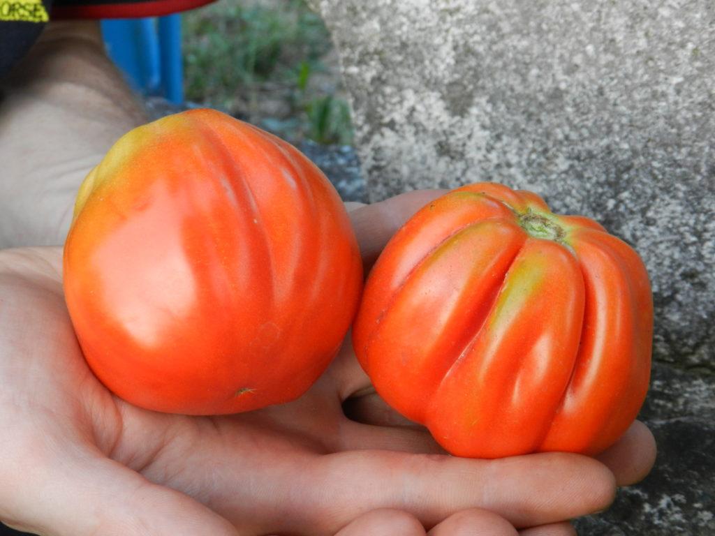 Giornata Nazionale del Pomodoro nel Calendario del Cibo Italiano