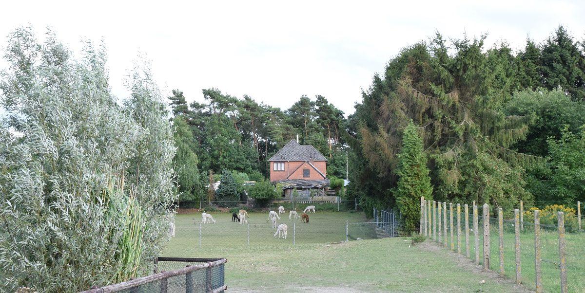 Soggiornare in una Fattoria di Alpaca. La nostra esperienza in Belgio.