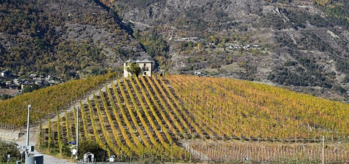 Cave des Onze Communes la Cantina sociale di Aymavilles in Valle d'Aosta