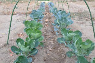 Il nostro primo Orto Invernale Quali verdure abbiamo piantato
