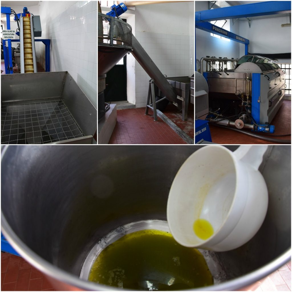 Tortini salati all'Olio Extravergine di Oliva Arnasca - Ricetta e Visita al Frantoio
