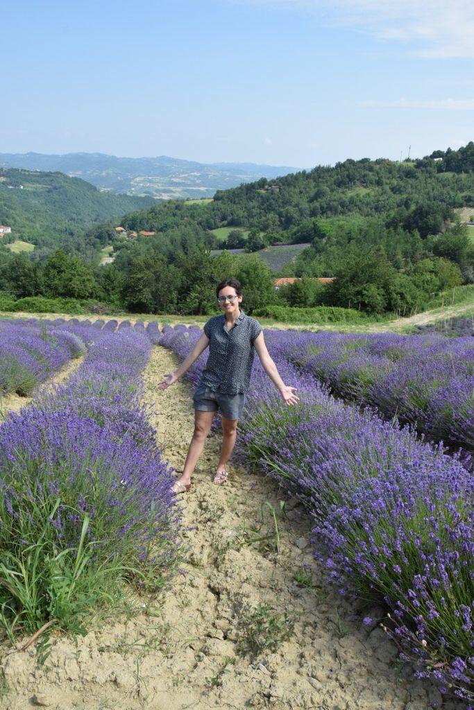 I Campi di Lavanda in Piemonte la fioritura a Castelletto d'Erro