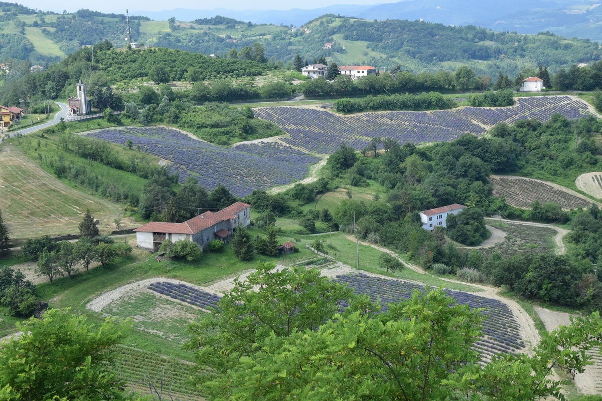 I Campi di Lavanda in Piemonte: la fioritura a Castelletto d'Erro