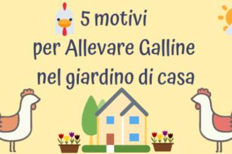 5 motivi per Allevare Galline nel giardino di casa
